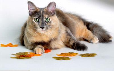 services-cat
